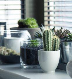 Les plantes d'intérieur qui nécessitent peu de lumière et de soins